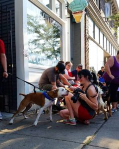 dog friendly grand rapids michigan dog friendly businesses